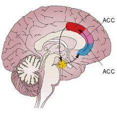 Un mécanisme liant la douleur chronique et l'anxiété ouvre la voie à de nouveaux traitements | Psychomédia