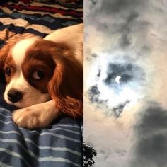 When your aunts dog looks like the solar eclipse via /r/funny http://ift.tt/2wCuBvG