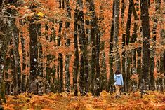 'Lost in the oak forest of Foloi' by Hercules Milas Canvas Prints, Framed Prints, Art Prints, Oak Forest, Block Wall, Hercules, Olympia, Art Boards, Wall Tapestry