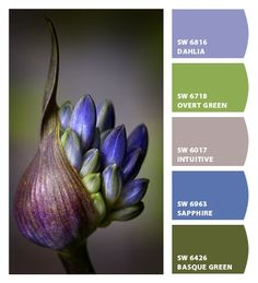 Paint colors from Chip It! by Sherwin-Williams Types Of Color Schemes, Color Combos, World Of Color, Color Of Life, Colour Pallette, Color Palate, Color Harmony, Design Seeds, Color Theory