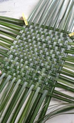 Twining with Kudzu, Iris & Bark Flax Weaving, Weaving Art, Basket Weaving, Leaf Crafts, Diy Crafts, Coconut Leaves, Palm Tree Art, Brindille, Maori Designs