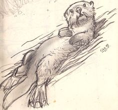 animal sketches Otter sketch - idea for a zentangle for my son. Pencil Drawings Of Animals, Animal Sketches, Drawing Sketches, Art Drawings, Drawings Of Fairies, Otter Tattoo, British Wildlife, Animal Paintings, Otters