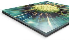 Bild auf Acrylglas. http://www.meinfoto.de/wand-deko/acrylglas-forex.jsf  #meinfoto #wanddeko #acrylglasforex #acrylglas