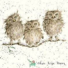 Wrendale Christmas card owls the 3 three wise men
