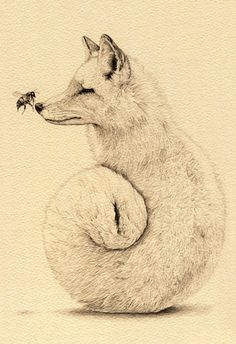 Creative Animal Drawings by Amy Dover