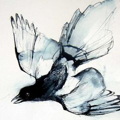 Magpie  after Audubon  original ink drawing on by sarahtakahashi