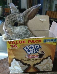 I love the bunny! but where do I find those poptarts??