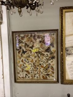 "Framed Insects Under Glass   25"" x 29""  $500  Country Garden Antiques 147 Parkhouse  Dallas, TX 75207"