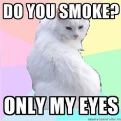 Makeup Addict Kitty