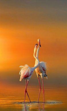 Photo A - Wildlife Love Birds, Beautiful Birds, Animals Beautiful, Flamingo Pictures, Bird Pictures, Animals And Pets, Cute Animals, Nature Sauvage, Flamingo Art