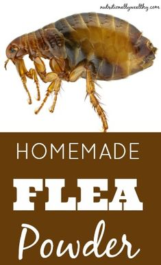 Ditch the toxic chemicals that are dangerous for both you & your pet. Instead, make this homemade flea powder that repels and kills fleas and ticks. Flea Remedies, Home Remedies, Natural Remedies, Flea Remedy For Dogs, Flea Powder For Dogs, Cat Has Fleas, Neem Powder, Flea Spray, Flea Treatment