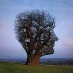 tree profile - look beyond. www.treeisee.com