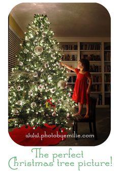 Perfect Christmas Tree Photos