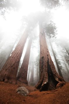 Sequoia National Park is one of America's most incredible national parks. #nature #national #park #forest #mountain #photography #sequoia