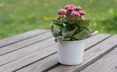 Como cuidar bem de plantas em vaso - Dicas de Mulher