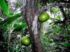 Image result for the rainforest trees