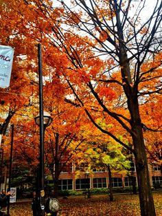 Fall trees in Ann Arbor, Michigan