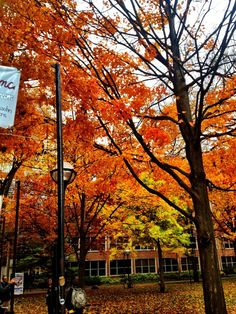 Fall trees in Ann Arbor, Michigan