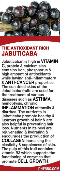 Jabuticaba high in Vitamin C, protein, calcium, antioxidants & good amount of iron & phosphorus while having anti-inflammatory & anti-cancer properties. The fruits skin is used for treating asthma, hemoptysis, chronic inflammation of tonsils & diarrhea. Promotes healthy & lustrous hair growth & prevent hair loss. Nutrients in its peel rejuvenate, hydrate & encourages production of collagen increasing skin elasticity. The pulps vitamin B3 supports functioning of enzymes & cell growth.