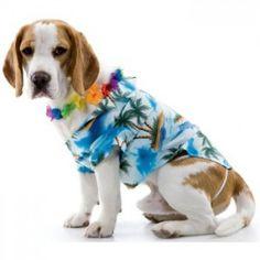 Dog on vacation costume