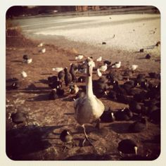 A swan with his thugs asking for explanations