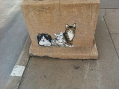 Arizona Has The Best Cat Street Art