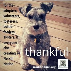 Maddie's Fund thanks everyone who is helping to create a No-Kill Nation. @maddiesadopt