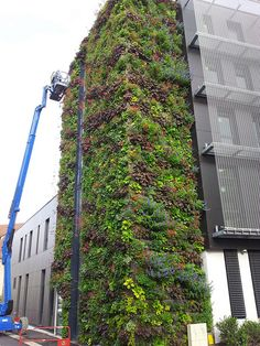 Façade végétale ENA Strasbourg