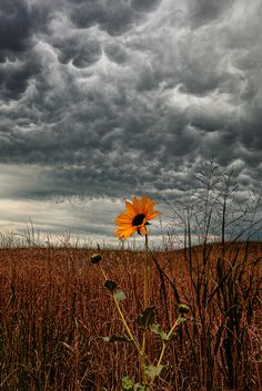 Nebraska storm clouds, prairie underneath with orange flower peaking. Art Et Nature, All Nature, Amazing Nature, Beautiful World, Beautiful Places, Beautiful Pictures, Nature Landscape, Whatsapp Wallpaper, Storm Clouds