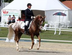 Goes to show you every bred can achieve this! (I too show an Appy in Dressage and love it!)