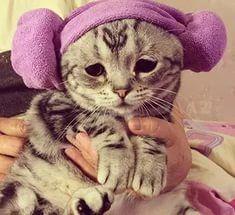 """Котик, кто тебя обидел?"