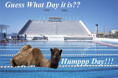 It S Hump Day Day Guess Motivation