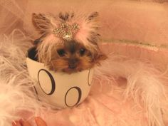 princess *I want one!