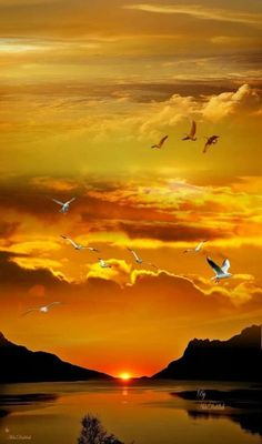 Amazing sunset shot by Tivadarné Csereklyei sun sky clouds birds yellow orange red reflection nature sunrise Amazing Sunsets, Amazing Nature, Sunset Photography, Landscape Photography, Amazing Photography, Photography Tips, Portrait Photography, Wedding Photography, Nature Pictures