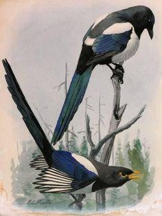 Best little black bird tattoo feathers 38 ideas Little Black Bird, Little Birds, Magpie Tattoo, Black Bird Tattoo, Tattoo Bird, Bird Nest Craft, Bird Artwork, Bird Illustration, Bird Drawings