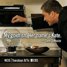 """My goldfish. Her name is Kate."" Tony DiNozzo on NCIS"