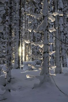 New Wonderful Photos: Snow in the forest with a hint of sunshine peeking through