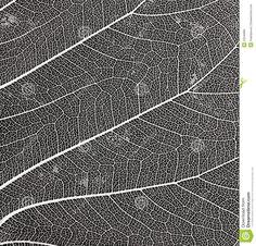 leaf skeleton - Google Search