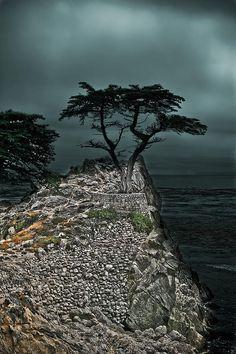 ✮ The famed Lone Cypress near Pebble Beach, California