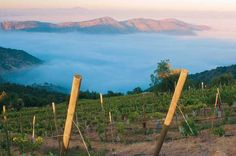 A Chilean vineyard....  Not sure what my obsession is with South America...but it is first on my travel wish list...