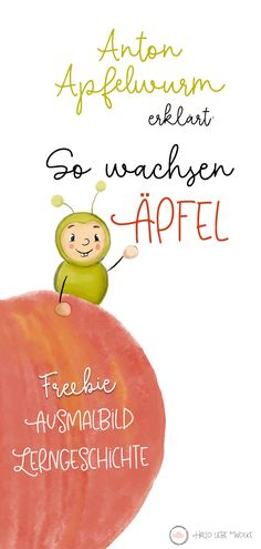 Anton Apfelwurm explains: This is how apples grow. (Learning History & Freebie) - How do apples grow? Anton Apfelwurm explains it to children in kindergarten, kindergarten, preschoo - Anton, Kindergarten Worksheets, In Kindergarten, Primary School, Elementary Schools, Thanksgiving Worksheets, Kindergarten Thanksgiving, Learning Stories, Hello Dear