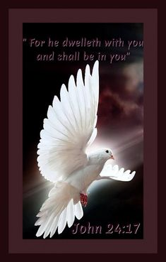 19 Best Holy spirit doves images in 2018 | Holy Spirit, Spiritism