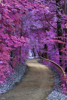 Beautiful purple forest Road to somewhere Nature photography Beautiful World, Beautiful Places, Amazing Places, Beautiful Forest, Beautiful Flowers, Beautiful Roads, Beautiful Scenery, Simply Beautiful, Absolutely Gorgeous