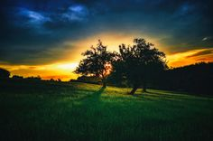 Beautiful Trees in the Sun Trees, Bright, Celestial, Sunset, Outdoor, Beautiful, Photos, Outdoors, Sunsets