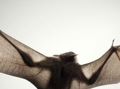 More Than Human: Tim Flach's Striking Portraits of Animals (http://timflach.com/)