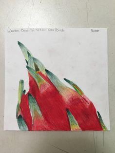 Dragon fruit (5/9/16)