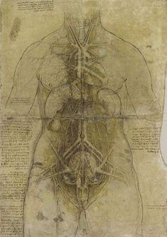 Dibujos de anatomía de Leonardo da Vinci