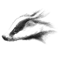 Fine Art Drawing, Art Drawings, Sketch A Day, Shop Art, Badger, Uk Shop, Surface Design, Giclee Print, How To Draw Hands