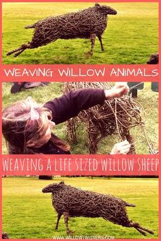 Watch this time lapse video of expert Willow sculptor Sara Holmes weave a life sized willow sheep using willow whips/withies.