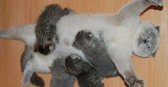 Die 18 stolzesten Katzenmütter der Welt. Nr. 3 bringt Dich zum kreischen.